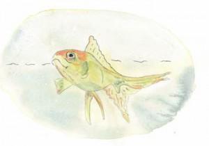 contact-fish